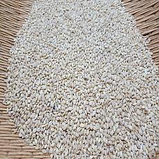 찰보리 1kg (2018년수확)